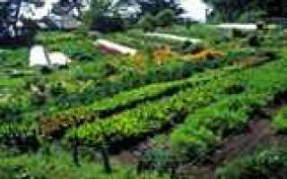 Расположение грядок на огороде