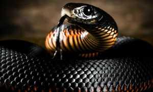 К чему снятся ребенку Змеи толкование сна
