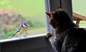 Что означает когда птичка в окно стучится