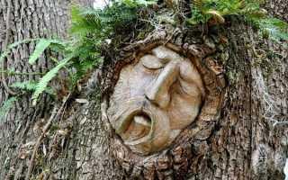 Узнать какое ты дерево по гороскопу