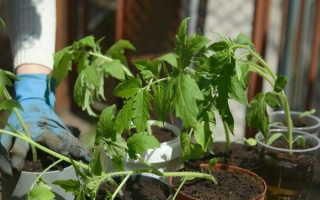 Подкормка рассады томатов в домашних