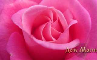 К чему снится цветок красновато розового цвета