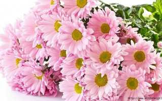 Ваш характер и любимый цветок