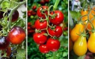 Крупноплодные помидоры томаты в теплице