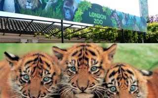 Тема зоопарк на английском языке с переводом