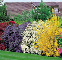 Выбираем лучшие цветущие кустарники для дачи