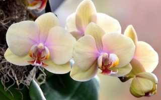 Время цветения орхидей в домашних условиях