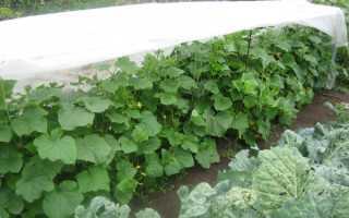 Оптимальный размер грядки для овощей удобнее