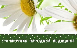 Кинза целебная польза пряной травы