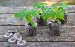 Как использовать торфяные таблетки для выращивания рассады