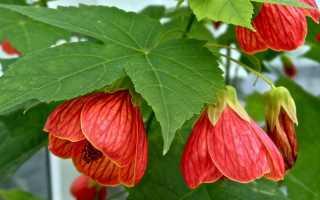 Какие неприхотливые цветы посадить дома
