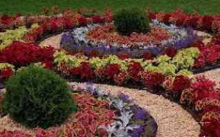 Все цветы в саду