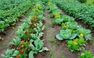 В каком порядке располагать овощные грядки