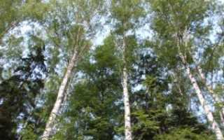Постановление правительства о пожарной безопасности в лесах
