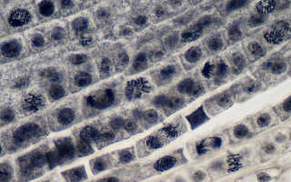 Основные характеристики проводящих тканей