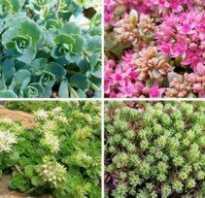 Однолетние цветы для тенистых участков сада