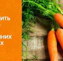 Как правильно сохранить морковь на зиму