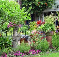Долго цветущие уличные цветы