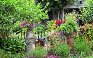 Какие неприхотливые многолетние цветы для дачи выбрать