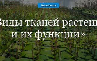Где находится проводящая ткань у растений