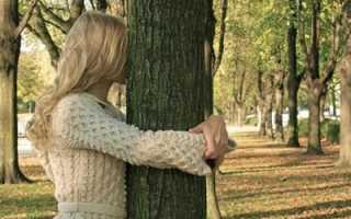 Лечебные и биоэнергетические свойства деревьев