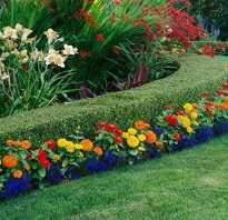Простые многолетние цветы для сада