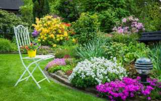 Посадить красивые цветы на даче