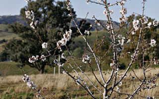 Минделла Что означает Дерево