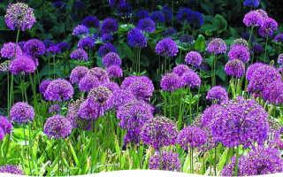 Самое интересное в блогах сад огород