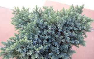 Можжевельник выращивание из семян