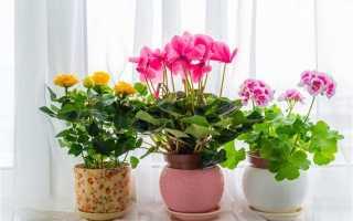 Растения которые привлекают деньги