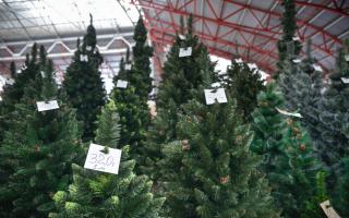 Торговля елками под новый год