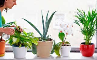 Комнатные растения с названиями и