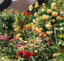 Самые красивые долголетние цветы
