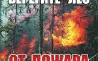 П 9 правил пожарной безопасности в лесах