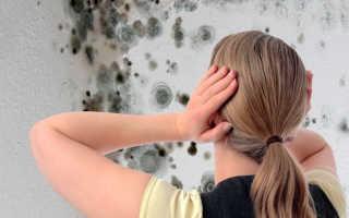 Как избавиться от грибка в доме