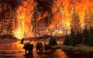 Правила пожарной безопасности в лесах это