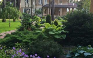 Теневыносливые и тенелюбивые растения для сада