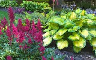 Многолетние цветы растущие в полутени