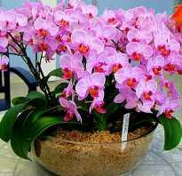 Какие цветы можно поливать удобрением для орхидей