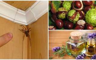 Эффективные средства избавления от пауков дома