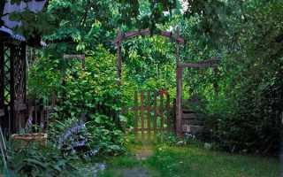 Самые красивые теневыносливые многолетние цветы для сада