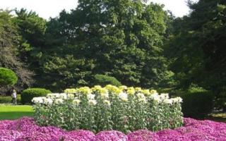Красивые неприхотливые цветы для сада