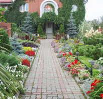 Самые простые в выращивании цветы для сада