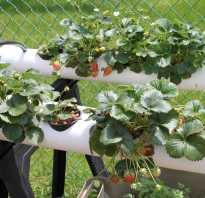 Выращиваем клубнику в трубах из пвх