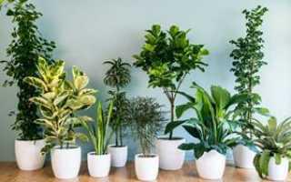 Комнатные растения по соннику