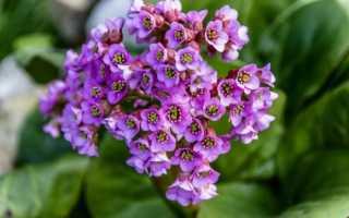Какие растения в алтайском крае