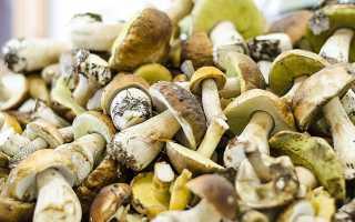 Выращивание грибов дома как бизнес
