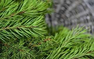 Продажа елок идея заработка зимой
